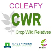 CCleafy_logo.png